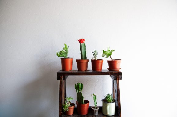 Why you Should Have Succulents in Your Home